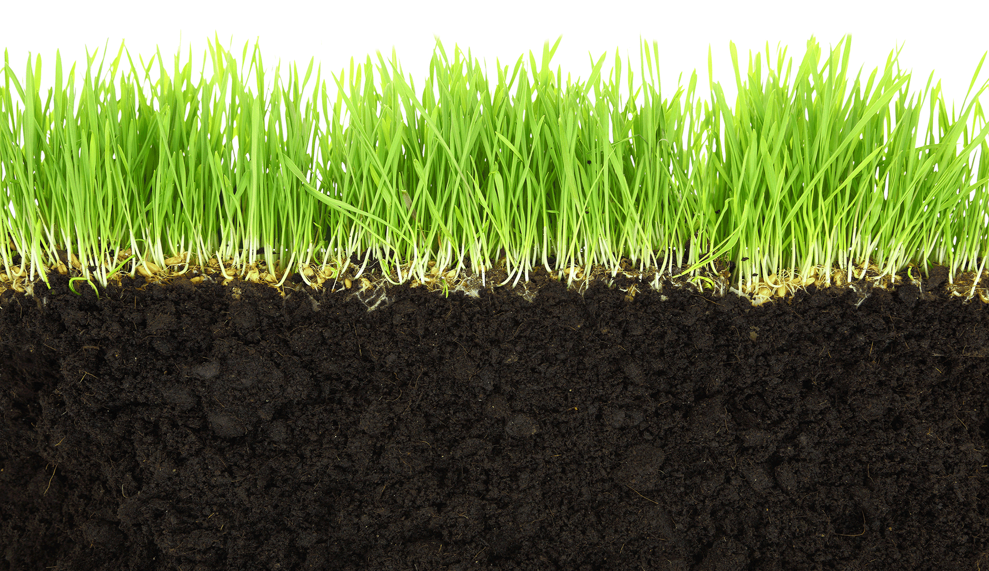Grass and dirt crop quick environmental for Soil and green